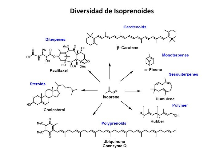 biosintesis de colesterol esteroides e isoprenoides