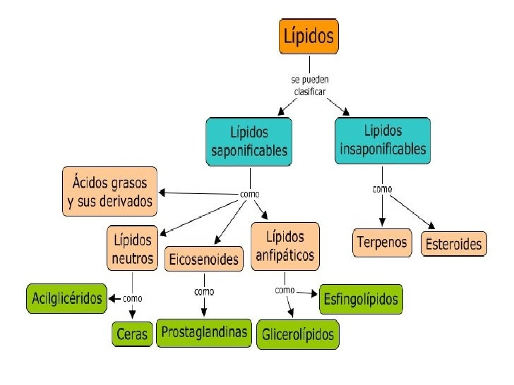 que son los esteroides anabolizantes