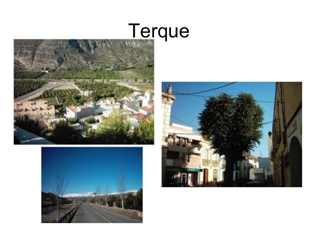 Terque