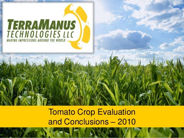 Tomato Crop Evaluation and Conclusions – 2010
