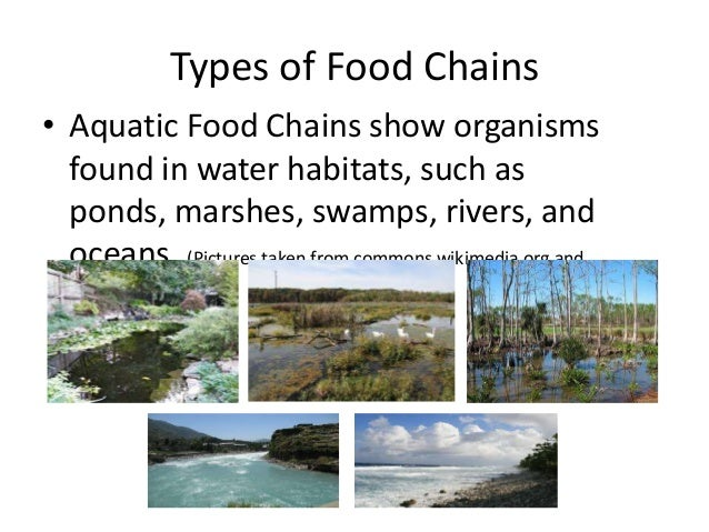 a freshwater aquatic and terrestrial food An aquatic ecosystem is an ecosystem in a freshwater ecosystems cover 078% of the earth's surface algae are a very important source of food for aquatic.