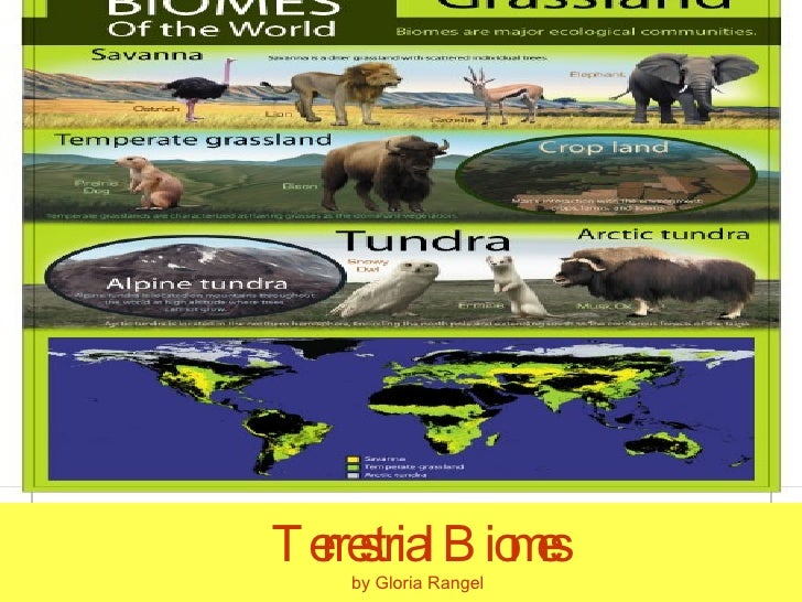terrestrial ecosystem diagram terrestrial free engine image for user manual download. Black Bedroom Furniture Sets. Home Design Ideas
