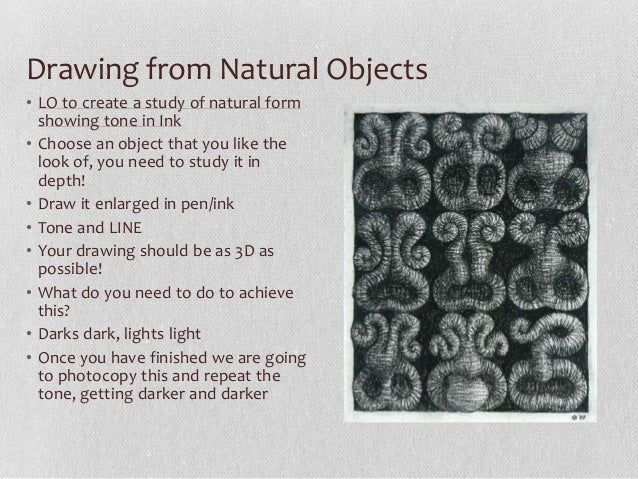 Nature Objects Drawing Drawing From Natural Objects•