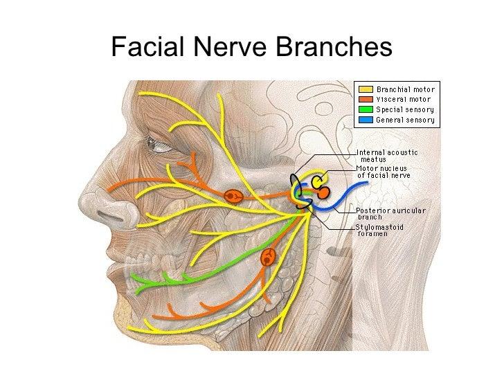 Facial nerve stimulation