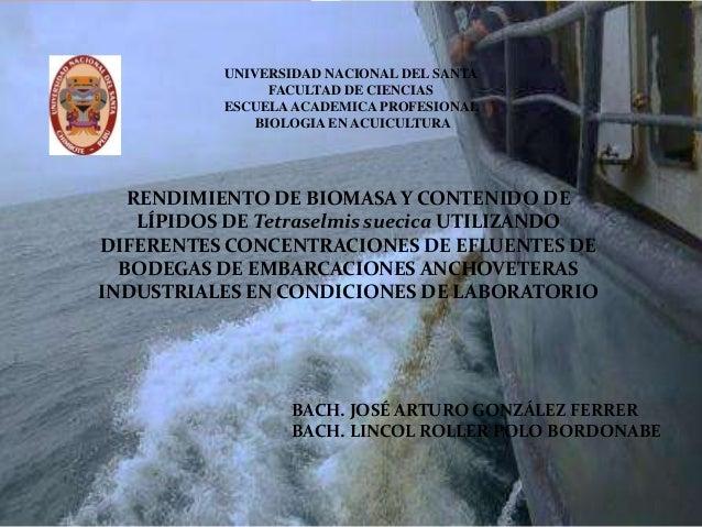 UNIVERSIDAD NACIONAL DEL SANTA FACULTAD DE CIENCIAS ESCUELA ACADEMICA PROFESIONAL BIOLOGIA EN ACUICULTURA  RENDIMIENTO DE ...