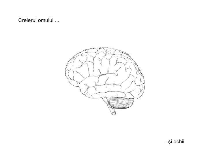 Creierul omului  ...  ...şi ochii