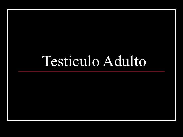 Testículo adulto