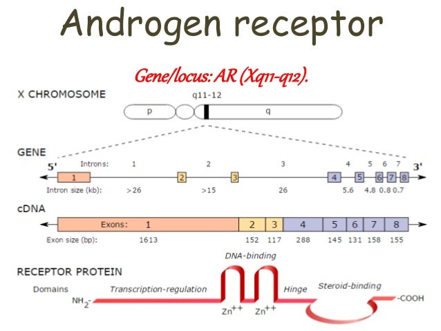 Androgen insensitivity syndrome - Genetics Home Reference