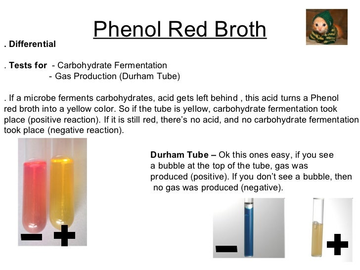 Phenol Red Broth . Differential .  Tests for   - Carbohydrate Fermentation - Gas Production (Durham Tube) . If a microbe f...