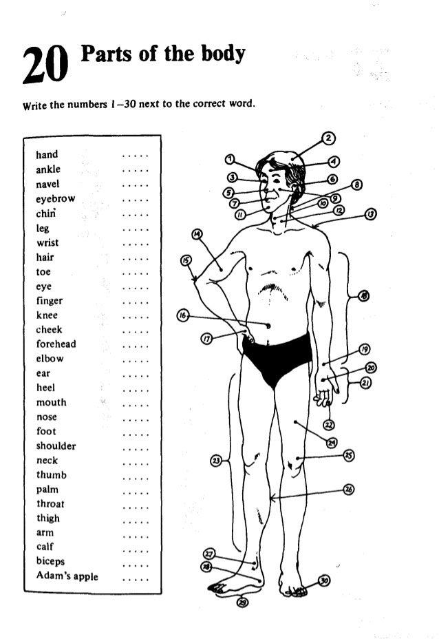 French Vocabulary  LanguageGuideorg