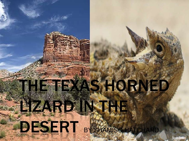 THE TEXAS HORNEDLIZARD IN THEDESERTBY SHAMISO HATCHARD