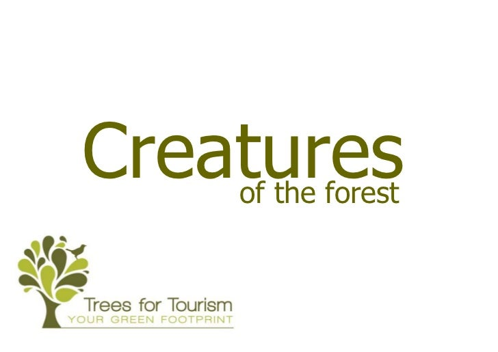 Forest Wildlife : Creatures of the forest