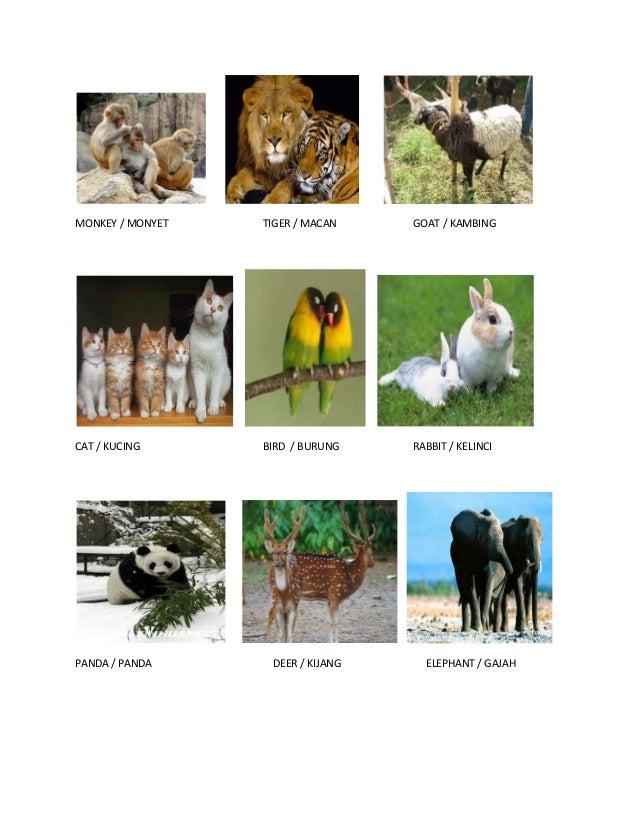 MONKEY / MONYET TIGER / MACAN GOAT / KAMBING CAT / KUCING BIRD / BURUNG RABBIT / KELINCI PANDA / PANDA DEER / KIJANG ELEPH...