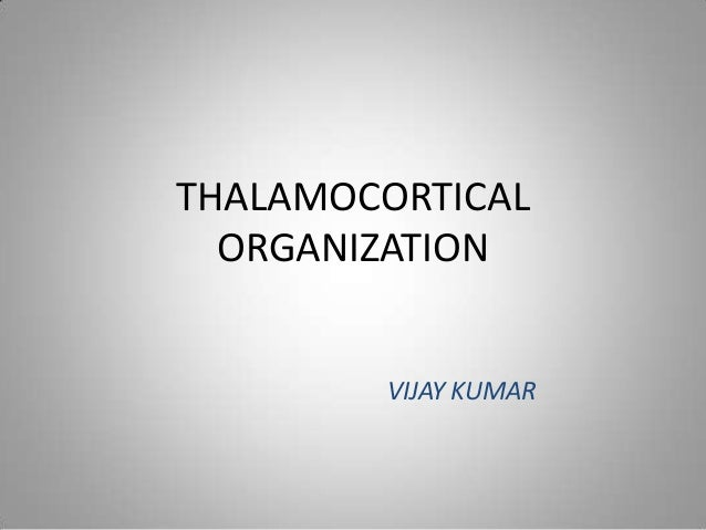 THALAMOCORTICAL ORGANIZATION VIJAY KUMAR