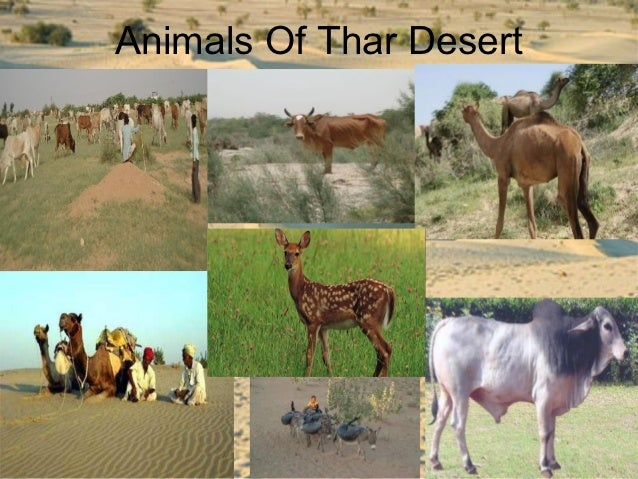 Indian Desert Animals With Names