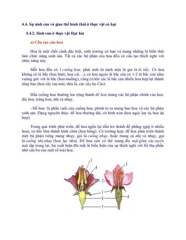 4.4. Sự sinh sản và giao thế hình thái ở thực vật có hạt  4.4.2. Sinh sản ở thực vật Hạt kín     a) Cấu tạo của hoa    Hoa...