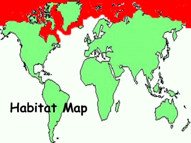 polar bears habitat map. Black Bedroom Furniture Sets. Home Design Ideas