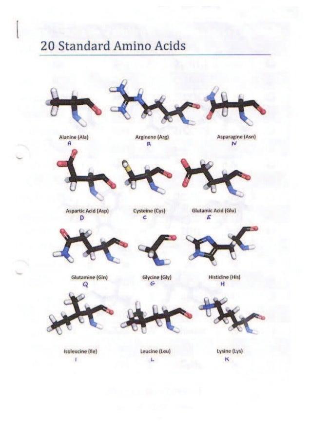 The 20 standard amino acids