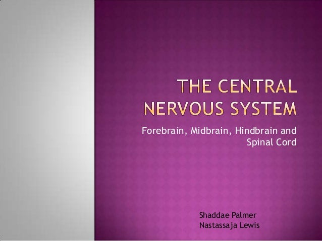 The central nervous system,,,ext