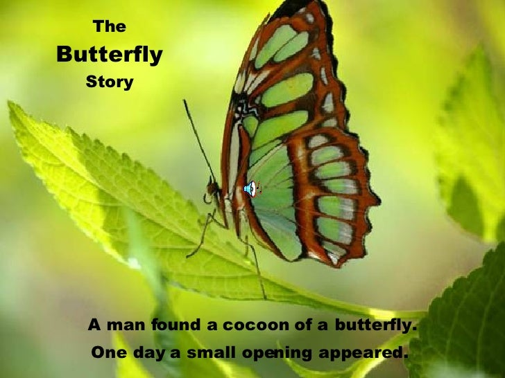 The Butterfly Story A man found a cocoon of a   butterfly. One day a small opening   appeared.