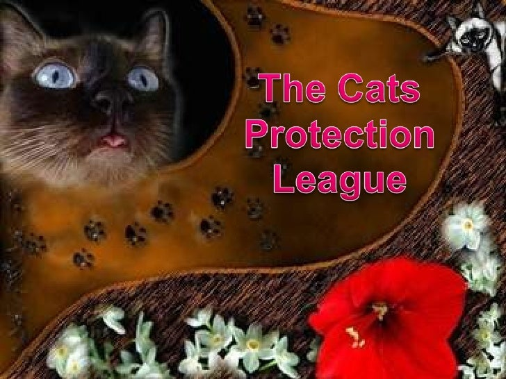 Cats Protection League