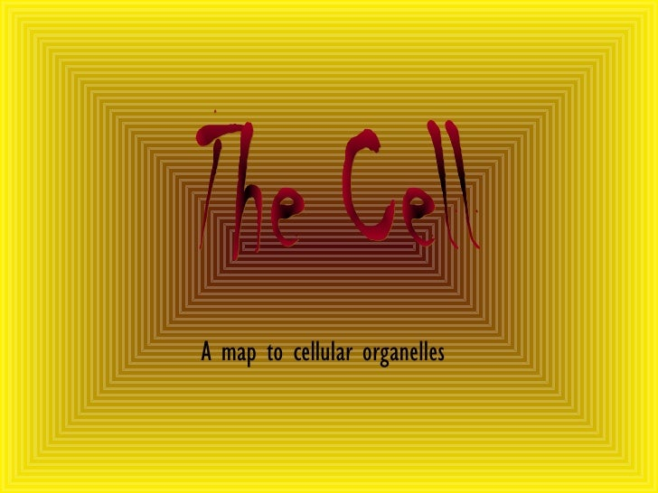 A map to cellular organelles