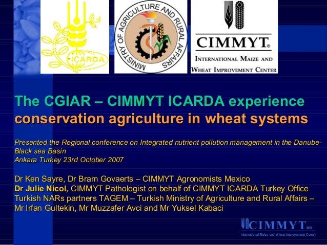 CIMMYTMR International Maize and Wheat Improvement Center The CGIAR – CIMMYT ICARDA experienceThe CGIAR – CIMMYT ICARDA ex...