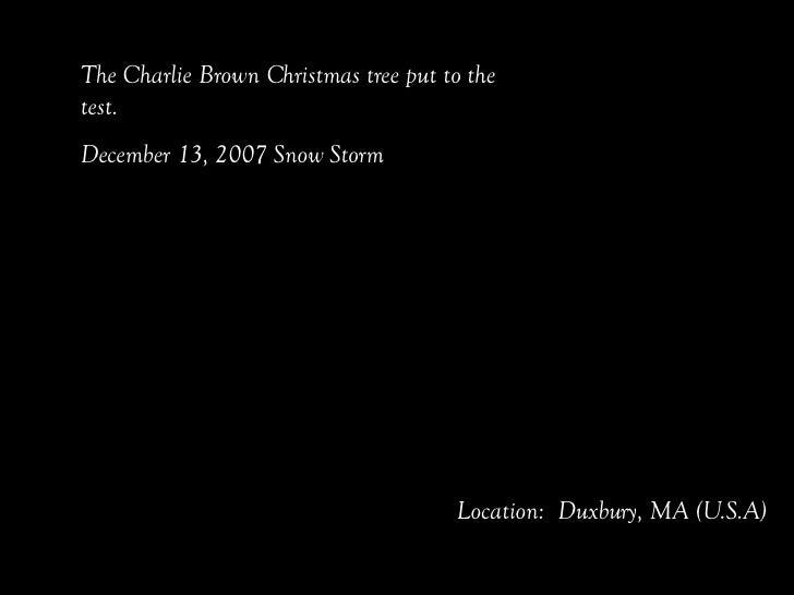 The Charlie Brown Christmas tree put to the test.  December 13, 2007 Snow Storm Location:  Duxbury, MA (U.S.A)