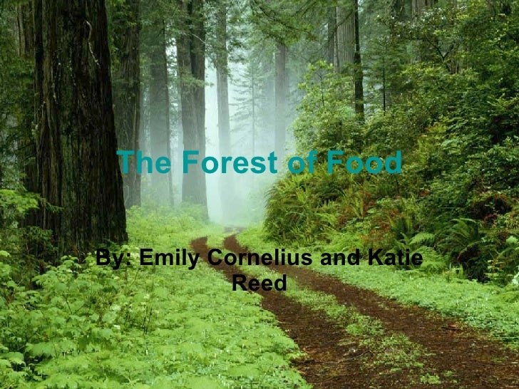 The Forest of Food By: Emily Cornelius and Katie Reed