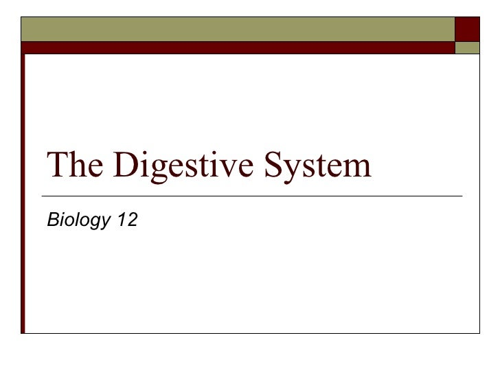 The Digestive System Biology 12