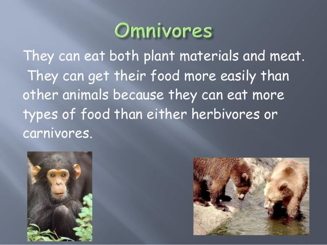 How Animals Get Their Food And Eat