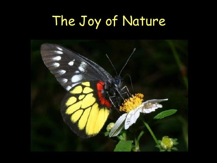 The Joy Of Nature