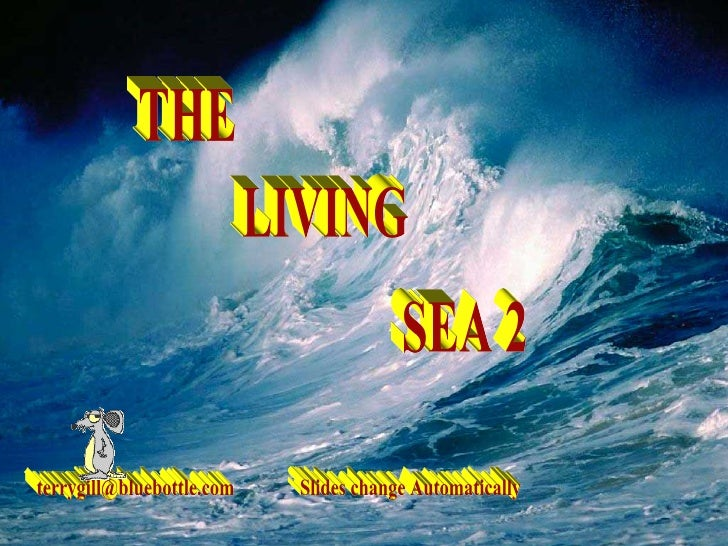 THE LIVING SEA 2 [email_address] Slides change Automatically