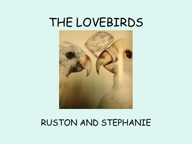 THE LOVEBIRDS RUSTON AND   STEPHANIE