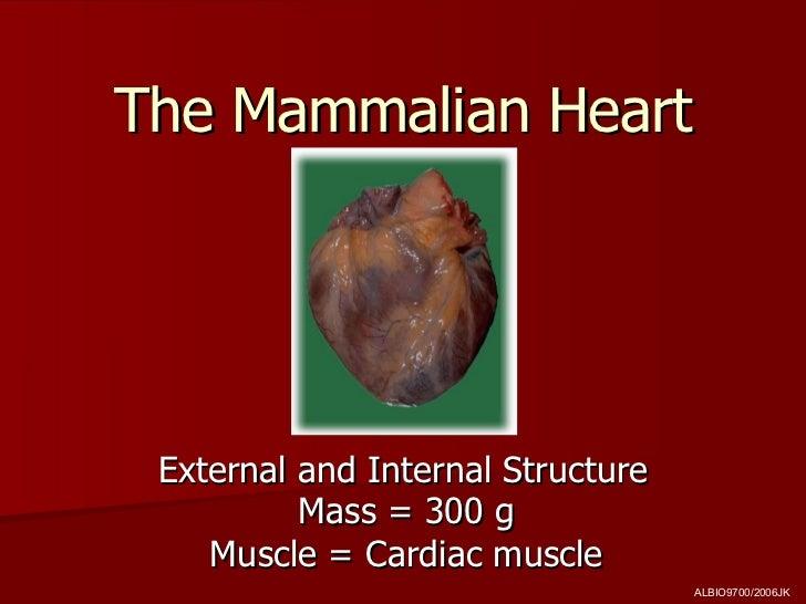 The Mammalian Heart External and Internal Structure Mass = 300 g Muscle = Cardiac muscle ALBIO9700/2006JK