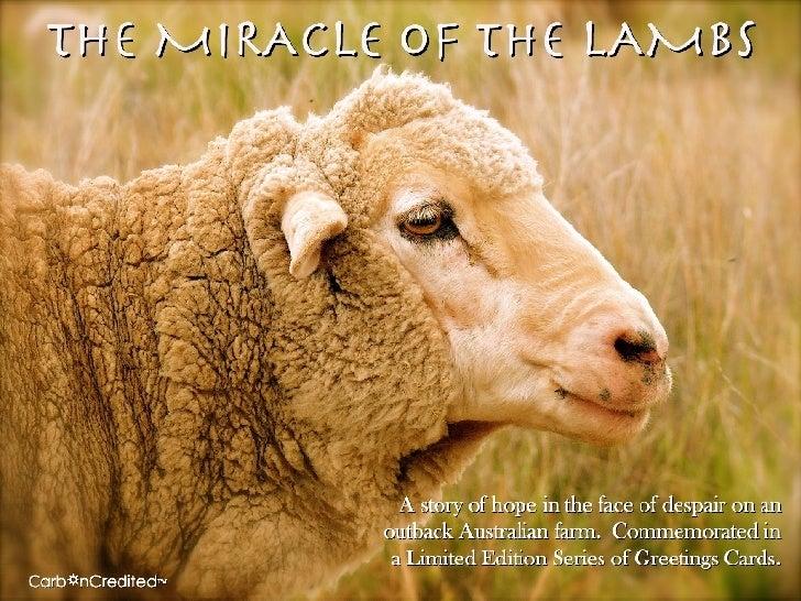 The Miracle of the Lambs: Adoptasheep Greetings Cards
