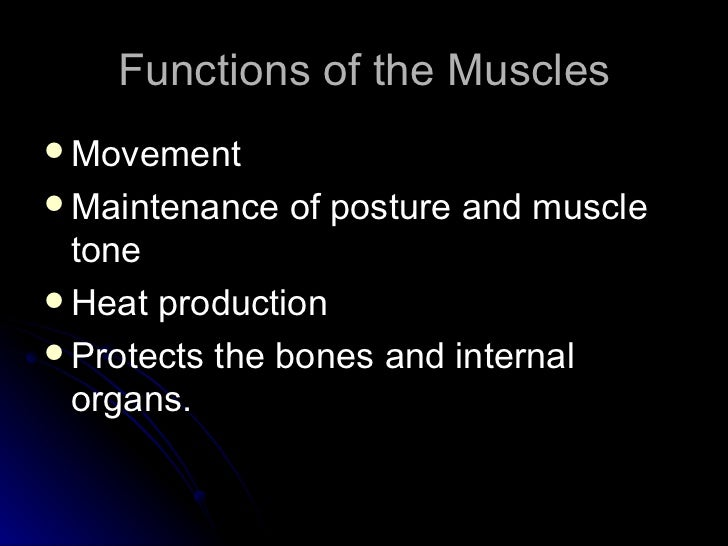 the muscular system essay Essay examples you see on this page are free essays, available to anyone  it  moves the muscles of the muscular system and controls all motor movements.