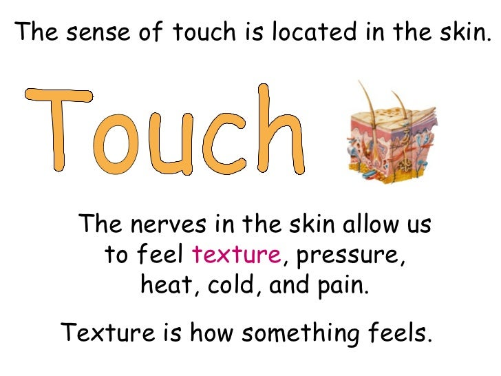 Sense Touch Touch The Sense of Touch is