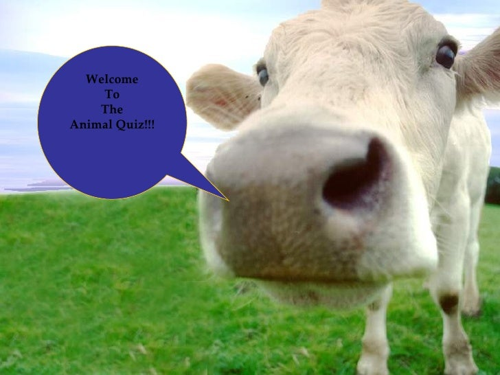 Welcome To The Animal Quiz!!!