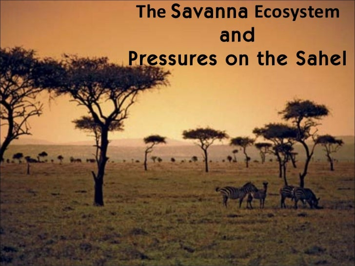The  Savanna  Ecosystem and Pressures on the Sahel
