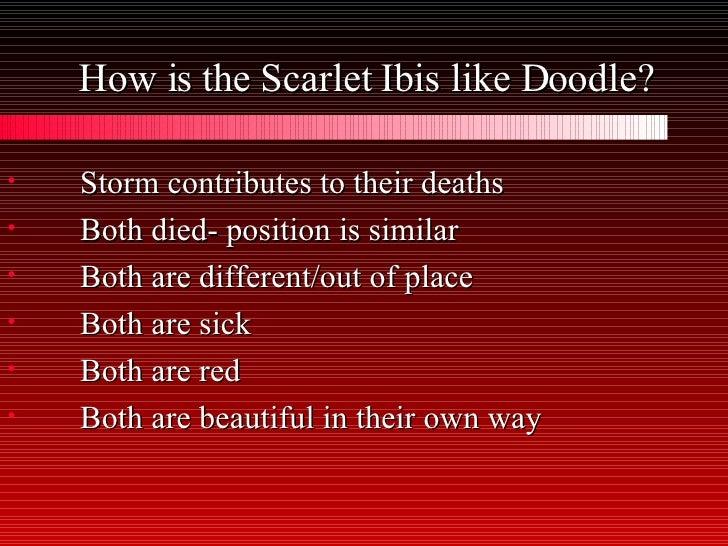 Scarlet Ibis Essay
