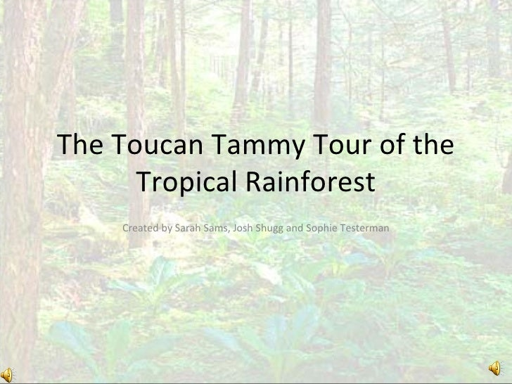 The Toucan Tammy Tour of the Tropical Rainforest Created by Sarah Sams, Josh Shugg and Sophie Testerman