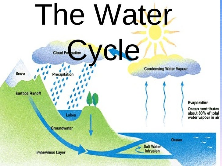 Water Cycle Without Labels The water cycle final product
