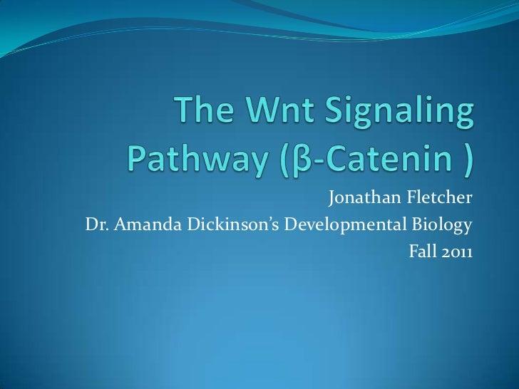 The  Wnt  Signaling  Pathway (β  Catenin )