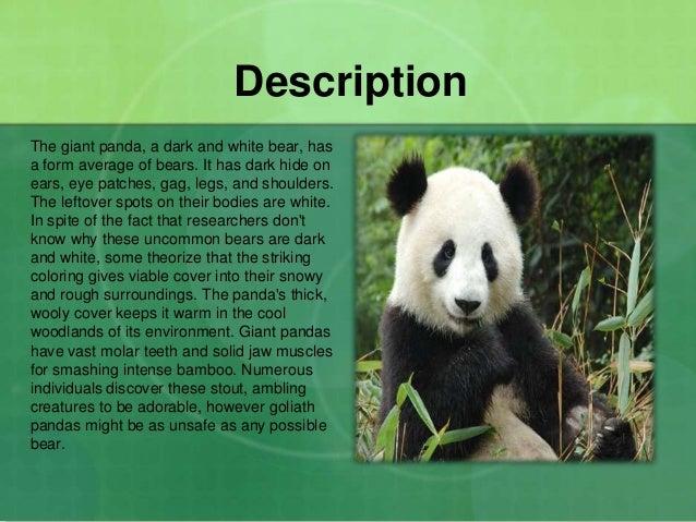 giant panda habitat description