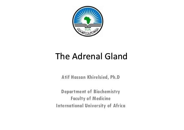 TheAdrenalGland  Atif Hassan Khirelsied, Ph.D                        ,   Department of Biochemistry       Faculty of Med...