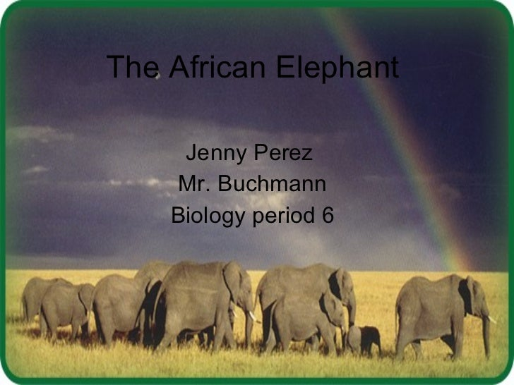 The african elephant jenny period 6
