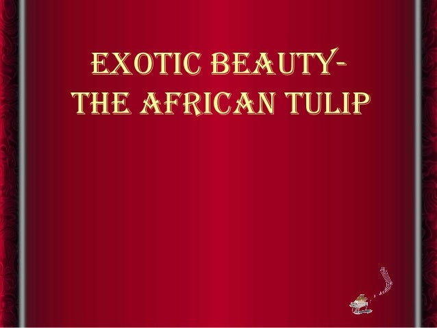 exotic beauty-the african tulip