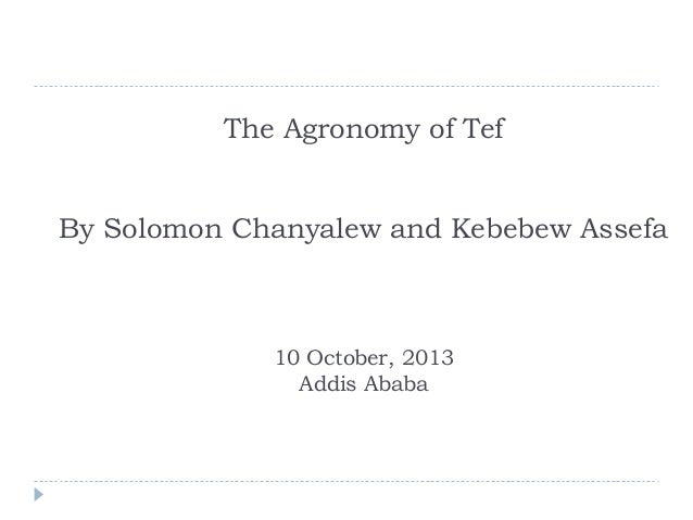 The Agronomy of Tef By Solomon Chanyalew and Kebebew Assefa  10 October, 2013 Addis Ababa
