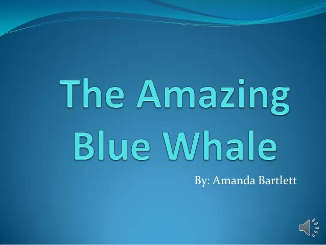 The amazing blue whale